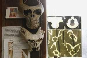 "Тайны ""Аненербе"": история, артефакты, архивы"