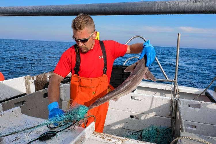 Рыбарь - это кто?