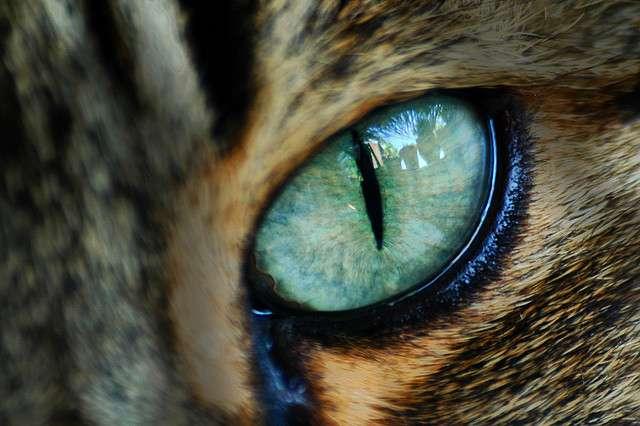 Слово «око»: значение и применение