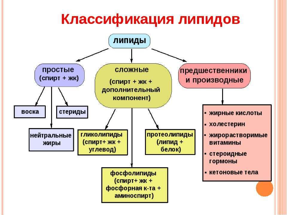 Липиды в биохимии: характеристика, выполняемые функции